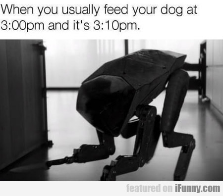 When You Usually Feed Your Dog At 3 00 Pm And...