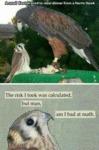 A Small Kestrel Tried To Steal Dinner From A...