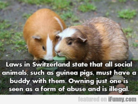 Laws In Switzerland State That All Social...