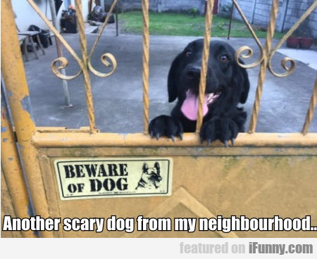 Another Scary Dog From My Neighbourhood...