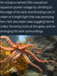 An Octopus Named Otto Caused An Aquarium Power...