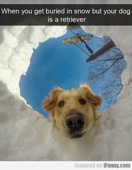 When You Get Buried In Snow But Your Dog Is...