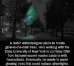 A Dutch Artist Designer Plans To Create Glow-in...