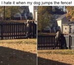 I Hate It When My Dog Jumps The Fence!