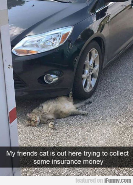 My Friends Cat Is Out Here Trying To Collect...