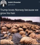 Trumps Loves Norway Because We Grow His Hair...