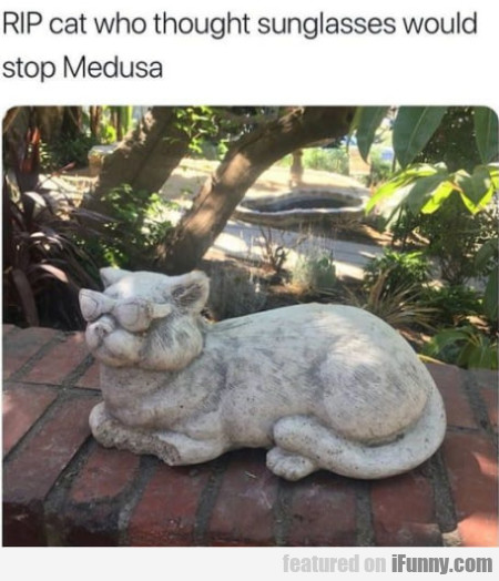 RIP cat who thought sunglasses would stop Medusa