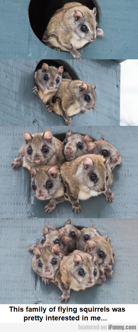This Family Of Flying Squirrels Was Pretty...