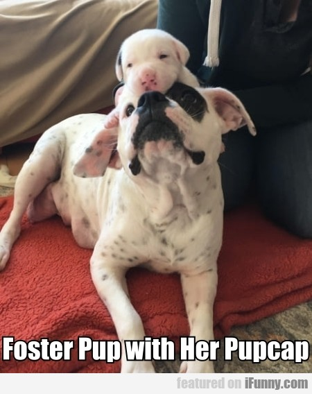 Foster Pup With Her Pupcap