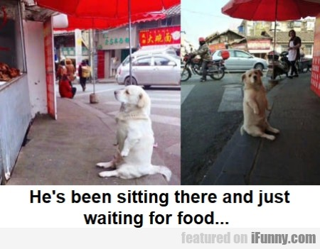 He's been sitting there and just waiting for food