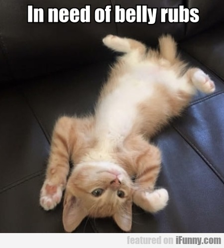 In Need Of Belly Rubs