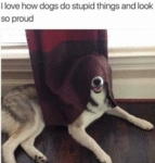 I Love How Dogs Do Stupid Things And Look So...