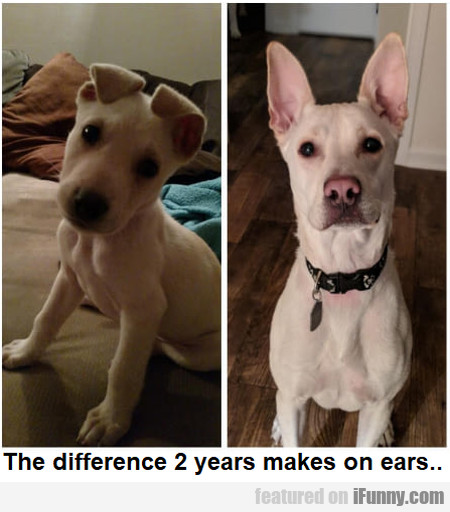 The Difference 2 Years Makes On Ears...