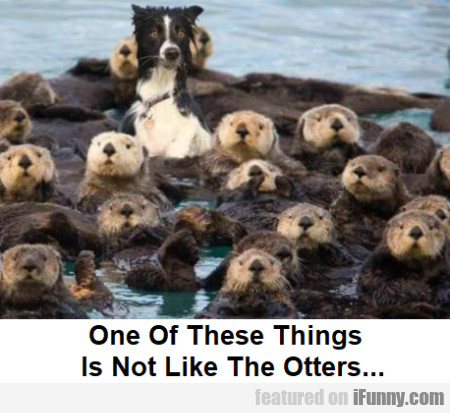 One Of These Things Is Not Like The Otters...