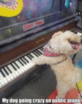 My Dog Going Crazy On Public Piano