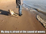 My Dog Is Afraid Of The Sound Of Waves