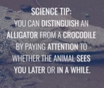 Science Tip: You Can Distinguish An Alligator...