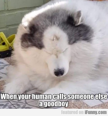 When Your Human Calls Someone Else A Goodboy...