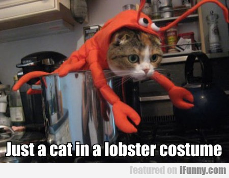 Just A Cat In A Lobster Costume