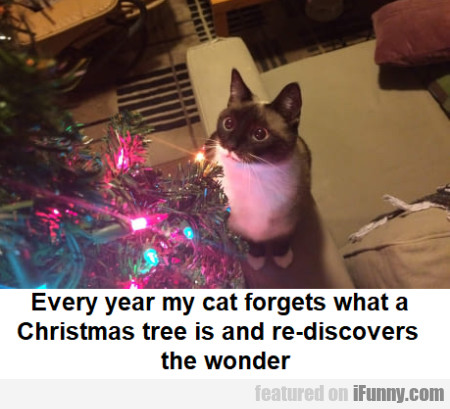Every Year My Cat Forgets What A Christmas Tree...