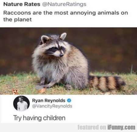 Raccoons Are The Most Annoying Animals On...