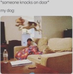 Someone Knocks On Door - My Dog:
