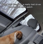 When Your Human Is A Really Bad Driver...