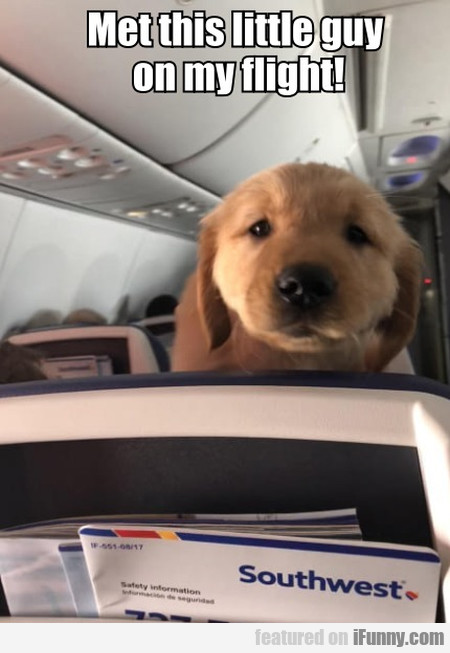 Met This Little Guy On My Flight