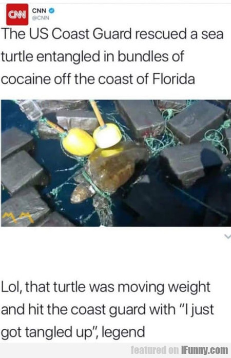 The US Coast Guard rescued a sea turtle...