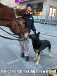 Police Horse Making A New Friend