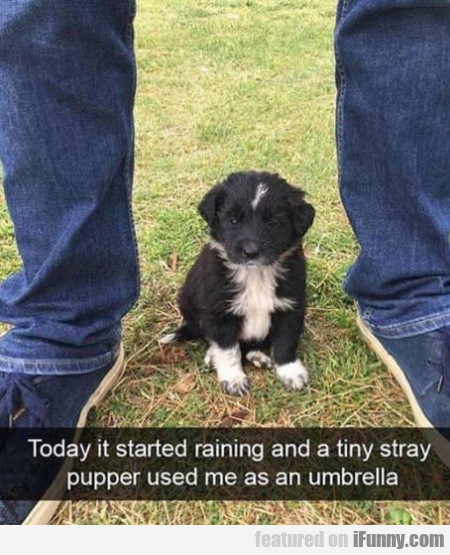 Today It Started Raining And A Tiny Stray...