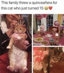 The Family Threw A Quinceanera For This Cat Who...