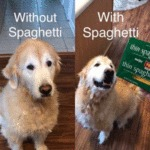 Without Spaghetti - With Spaghetti