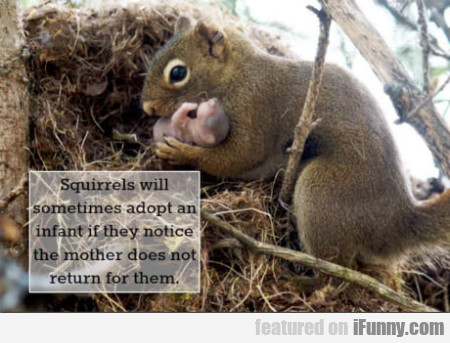 Squirrels Will Sometimes Adopt An Infant If They..