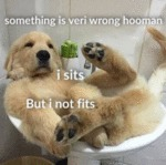 Something Is Veri Wrong Hooman. I Sits But...