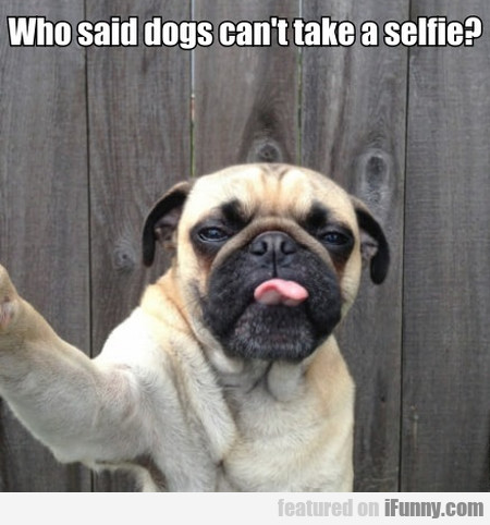 Who said dogs can't take a selfie?