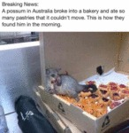 Breaking News - A Possum In Australia Broke Into..