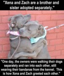 Xena And Zach Are A Brother And Sister Adopted...