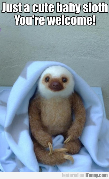 Just A Cute Baby Sloth. You're Welcome!