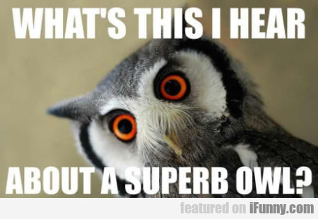 What's This I Hear About A Superb Owl?