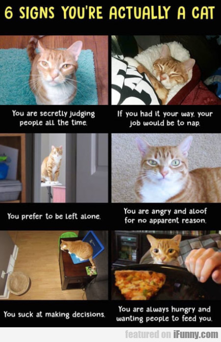 6 Signs You're Actually A Cat - You Are...