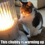 This Chubby Is Warming Up