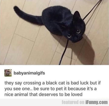 They Say Crossing A Black Cat Is Bad Luck But If..