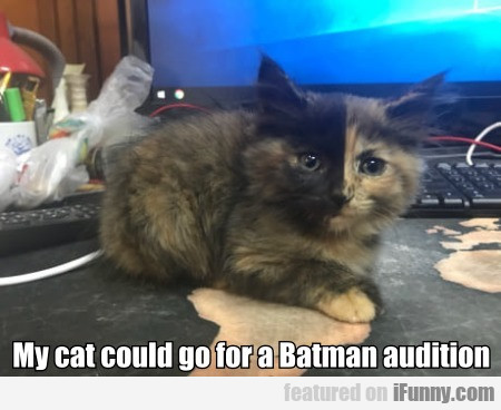 My Cat Could Go For A Batman Audition