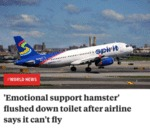 Emotional Support Hamster Flushed Down Toilet...