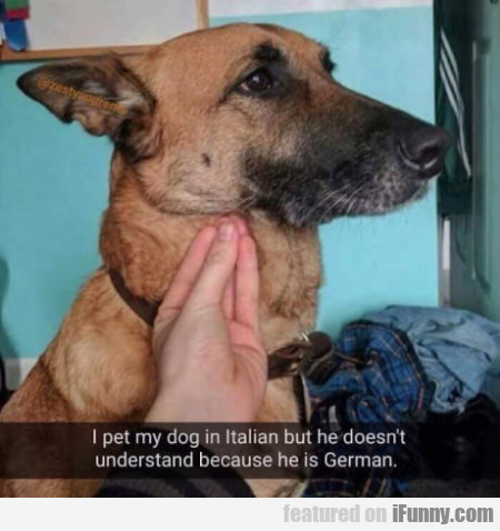 I pet my dog in Italian but he doesn't understand