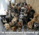The Neighbourhood Gathered Up!