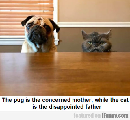 The pug is the concerned mother, while the cat...
