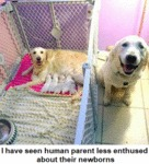 I Have Seen Human Parents Less Enthused About...
