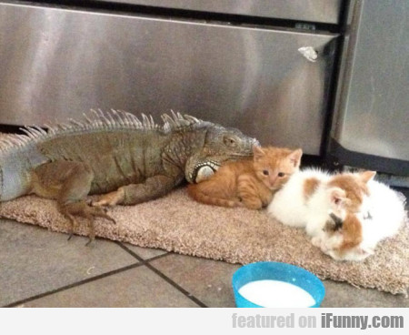 Big Lizard Protects Kittens...